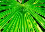 Альтернатива карликовой пальме в лечении простатита